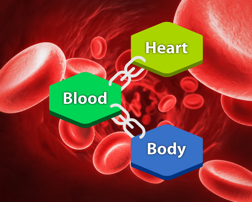 Blood and Life Heart Body
